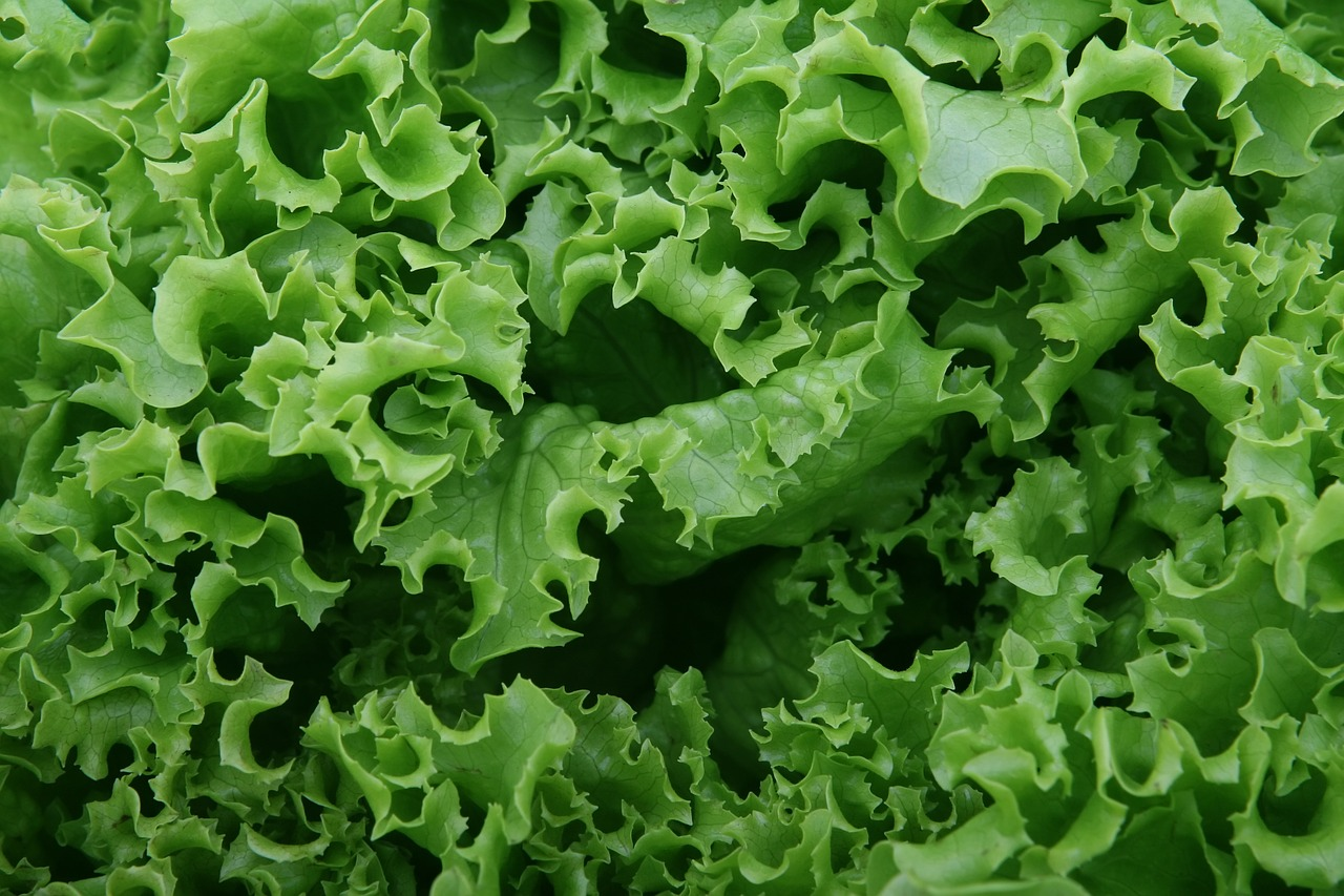 Important Things To Know About Iceberg Lettuce