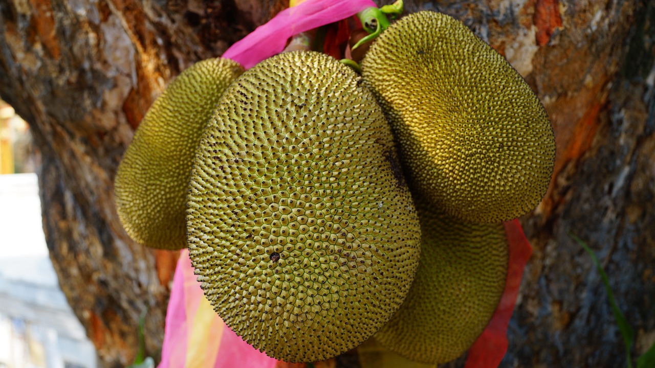 Important Things To Know About Jackfruit