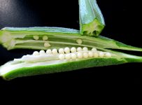 Important Things To Know About Okra (Ladies' Finger) - A to Z Fruit & Veg