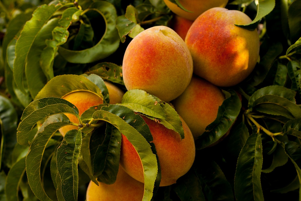 Important Things To Know About Peaches