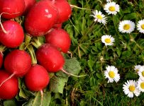 Important Things To Know About Radish - A to Z Fruit & Veg