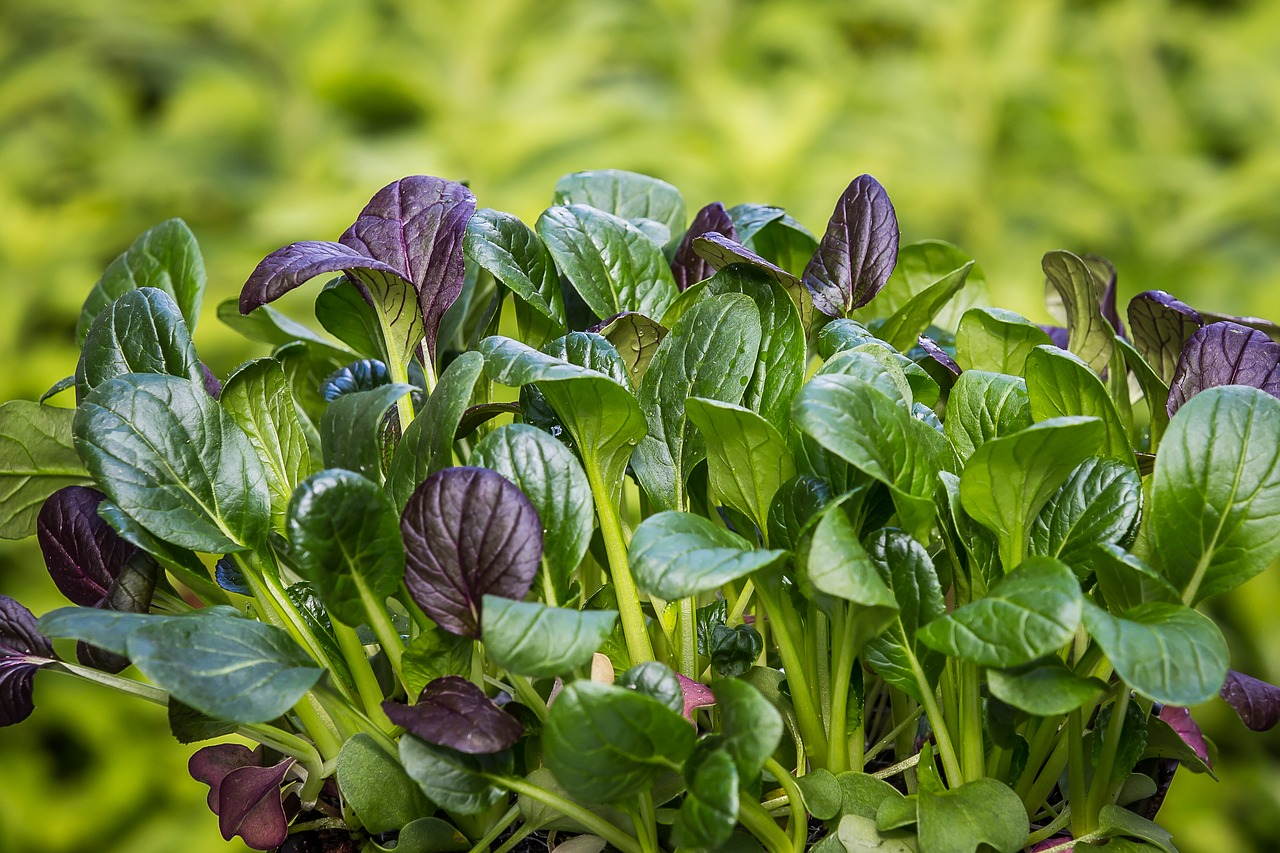 Important Things To Know About Spinach - A to Z Fruit & Veg